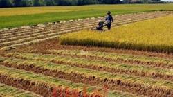 Căn cứ xác định người trực tiếp sản xuất nông nghiệp để cấp Sổ đỏ