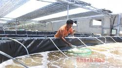 Khánh Hòa: Làm ao trên cạn nuôi tôm công nghệ cao-cái khó ló cái khôn, mỗi năm lời 15 tỷ là bình thường