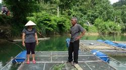 Cao Bằng: Hết nghèo, lại có của ăn của để nhờ nuôi cá lồng đặc sản trên sông Vi Vọng