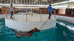 Cảnh nuôi ngựa trong khách sạn hạng sang khiến con người cũng phải mơ ước
