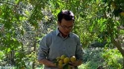 Bắc Kạn: Trồng cam, trồng quýt theo tiêu chuẩn VietGAP, nông dân có lợi gì?