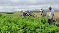 Quảng Nam: Hội Nông dân thị xã Điện Bàn - Trang bị kiến thức cho nông dân làm giàu