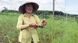 """Gia Lai: Trồng 4 loài cây và nuôi 1 thứ con, tưởng nuôi trồng """"lung tung"""", nào ngờ bà nông dân này thu tiền tỷ"""