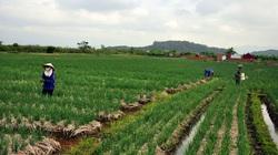 3 nhóm đối tượng được miễn thuế sử dụng đất nông nghiệp năm 2020