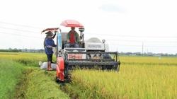 Vượt khó khăn, sản xuất lúa miền Bắc thắng lớn