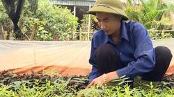 Phú Thọ: Trồng la liệt đủ thứ cây thuốc quý, trai làng thu lời 500 triệu/năm ở 1ha đồi