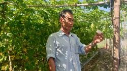 """Tây Ninh: Tiết lộ bí quyết trồng khổ qua leo giàn đẹp như phim khiến loài ruồi vàng """"sợ khiếp vía"""""""