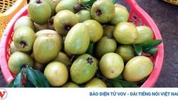 Tiền Giang: Hồng xiêm tăng giá kỷ lục, 1ha thu nhập 300 triệu, nhà vườn trồng thêm 2.500ha