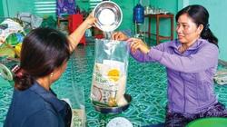 Cà Mau: Nông dân rủ nhau trồng thứ lúa hữu cơ và nuôi tôm càng xanh, gạo lắm người mua, tôm còn bán đắt hơn
