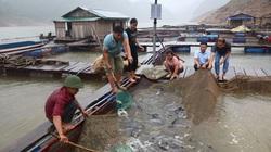 """Lai Châu: Một ông tỷ phú nông dân thuần hóa và nuôi thành công loài """"thủy quái"""" ở thượng nguồn sông Đà"""