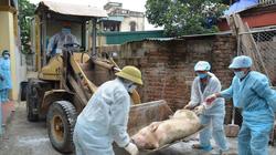 Giám sát chặt, ngăn chặn bệnh dịch tả lợn châu Phi