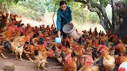 Bắc Giang nở rộ vùng chuyên canh, nông dân làm giàu từ trồng trọt, chăn nuôi