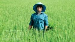 Thái Bình: Bỏ nghề lái xe, 9X về quê cấy lúa đặc sản trên cánh đồng thẳng cánh cò bay 24ha mà thành tỷ phú