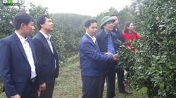 Video: Đoàn Công tác cụm thi đua số 2 Trung Ương Hội Nông dân Việt Nam làm việc tại Hà Tĩnh
