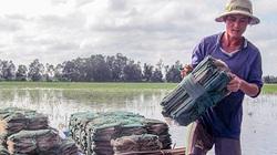 Hậu Giang: Nước tràn đồng, vùng rốn cá một thời nay dân vẫn tấp nập đánh bắt như sợ mai mốt nước rút ra ngay