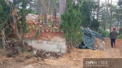 Đà Lạt: Hơn 800m2 rừng thông bị lấn chiếm cách phòng làm việc của Trưởng ban quản lý rừng chỉ 100m