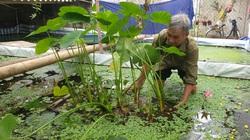 Thanh Hóa: Tuyệt chiêu nuôi ốc nhồi đặc sản qua mùa đông, ông nông dân U70 kiếm hàng trăm triệu/năm