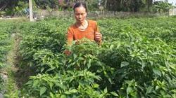 Trồng thứ cây ra quả cay xé lưỡi, vợ chồng ông nông dân tỉnh Thái Nguyên xây nhà lầu, tậu xe hơi
