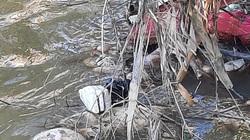 TT-Huế: Hãi hùng hàng loạt xác lợn đang phân hủy nổi ven sông gần lò mổ