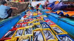 """Chùm ảnh: Ngư dân tỉnh Bình Định tất bật hành trình kiếm """"lộc"""" biển sau bão"""