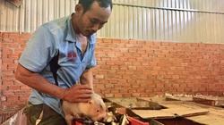 Nuôi dúi má đào như đánh phấn, ăn toàn đồ rẻ tiền, ông nông dân tỉnh Đắk Lắk bán 18-20 triệu/cặp