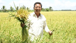 Hiệu quả bất ngờ của N46.Plus từ chia sẻ của người nông dân