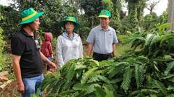 """Lợi ích kép từ việc """"cân bằng dinh dưỡng"""" cho đất với cây cà phê Tây Nguyên"""