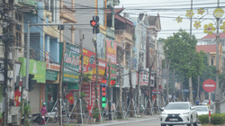 Vĩnh Phúc: Loạt cây xanh trồng bằng tiền ngân sách, chết khô trên tuyến đường trung tâm thành phố