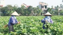 Vĩnh Phúc: Diện mạo mới ở Bình Xuyên sau 5 năm về đích nông thôn mới