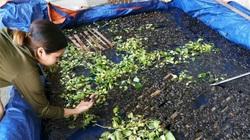 Nghệ An: 1 xã vùng cao mà có hơn 800 hộ nuôi ếch thịt, nhiều hộ nuôi cả nghìn con