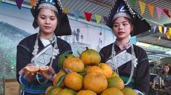 """Quýt ngọt, gạo Séng Cù, bưởi Múc Mường Khương """"đổ bộ"""" về Thủ đô, người dân háo hức mua ăn thử"""