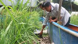 Đồng Tháp: Nuôi lươn đồng ở vùng thượng nguồn sông Tiền, nông dân Hồng Ngự trúng lớn