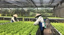 Nông nghiệp đất mỏ bứt phá từ công nghệ