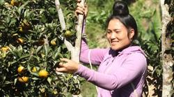"""Trồng cam Đường Canh, nữ hội viên nông dân """"bỏ túi"""" hơn trăm triệu mỗi năm"""