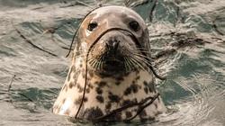 Rong biển bám quanh người hải cẩu lọt top ảnh động vật đẹp