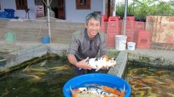 Nam Định: Nuôi cá tạp nham mãi không khá, bèn nuôi thứ cá giá nghìn đô, ông nông này giàu có ngay