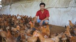 Đà Nẵng: Vô rừng nuôi gà ri thả vườn, một ông nông dân TP Đà Nẵng lãi ròng 300 triệu mỗi năm