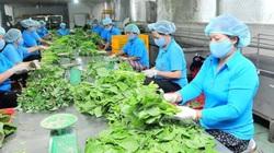 Kinh tế tập thể thu hút hơn 3 triệu lao động, đóng góp 4,8% GDP cả nước