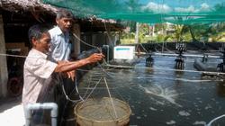 Long An: Tập tành làm ao nổi nuôi tôm, nông dân nuôi 4 vụ trúng cả 4