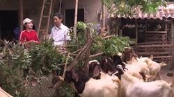 2 ông nông dân thu lãi nhanh nhờ liên kết nuôi dê với trang trại dê DTH FAMRT