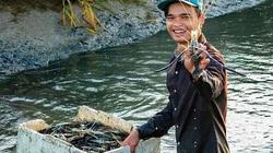 Cà Mau: Vùng đất nông dân đổi đời nhờ nuôi tôm càng xanh to bự trong ruộng lúa đẹp như tranh