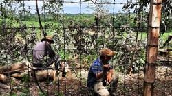 BQL các KCN tỉnh Đắk Lắk: Vụ chặt hơn 200 cây xanh trong KCN Hoà Phú có dấu hiệu cố ý làm trái