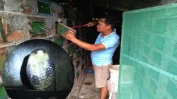 Sóc Trăng: Một ông nông dân nuôi hàng chục ngàn con rắn hổ mang, cứ bán 1 con lời 1 triệu, dân xem khiếp vía