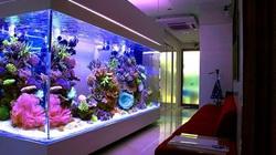 8 nguyên tắc vàng chọn nuôi cá cảnh để hút trọn tài lộc vào nhà