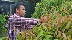 Tây Ninh: Trồng những cây rau rừng tốt um tùm, rộng mênh mông, nông dân ở đây chăm nhàn mà thành tỷ phú, triệu phú