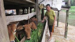 Khơi dậy tinh thần vươn lên thoát nghèo: Mô hình hỗ trợ phải chống được rủi ro