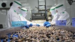 Tìm thị trường tiêu thụ cho 2 loại nhuyễn thể tiềm năng nhất Việt Nam