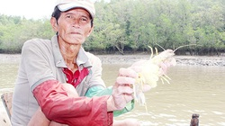 """Nhớ tháng 3 ra sông Đồng Nai bắt sản vật: Loài tôm tít """"nữ hoàng"""" to chà bá, con chem chép vàng như tóp mỡ"""