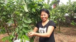 Thái Nguyên: Trồng vườn ổi lê ra trái giòn, ngọt, vợ chồng ông nông dân có tiền quanh năm