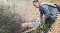 Bắc Kạn: Mở 2,4km đường trái phép vào phá rừng tự nhiên trên quy mô lớn